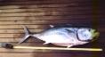 grcija-2002-29
