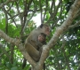 sri-lanka-2011-09