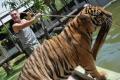 tajska-2008-12
