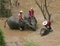 tajska-2008-31