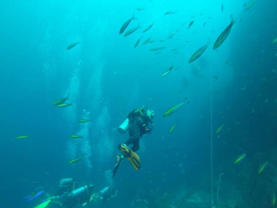 Masa diving big