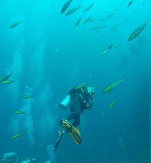 Masa diving